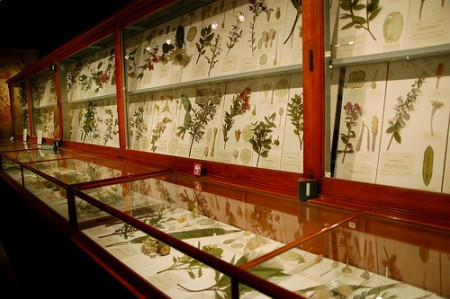 Boston's Harvard Museum of Natural History 6.jpg