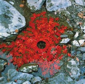 Andy Goldsworthy 4.jpg